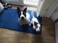 Dotty & Oscar C 2